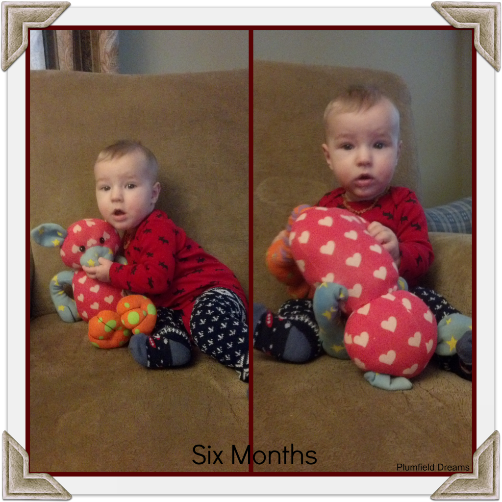 Noah Six Months ~ Plumfield Dreams
