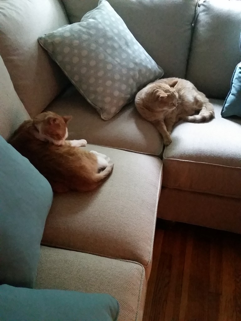 Plumfield Dreams ~ Cats on the Couch